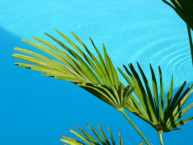 listy palmy.jpg