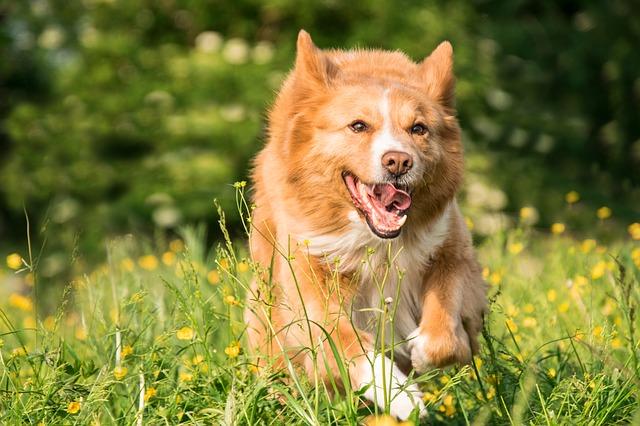 pes na louce