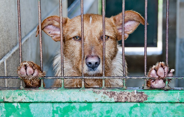 pes v kleci