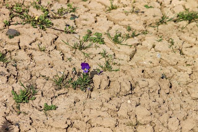 kytka na orné půdě